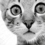 Коты и несколько фактов о пушистых питомцах (Видео)