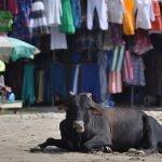 Что интересного известно о штате ГОА, Индия