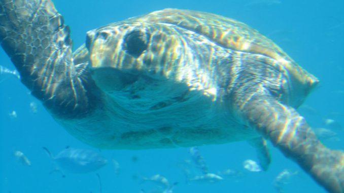 Черепаха. о. Крит