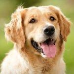 Плюсы и минусы завести собаку