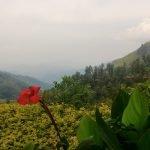 В каких странах выращивают чай | Шри-Ланка, Китай, Африка